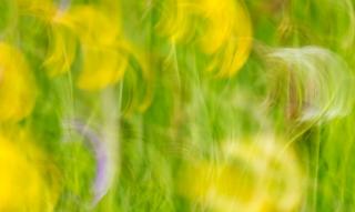 Buttercup swirl