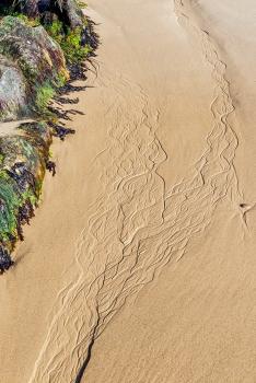 Cove bay veins