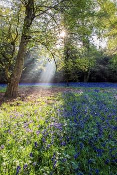 Haughley Spring Morning