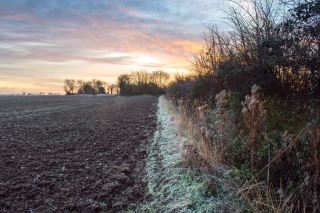 Winter Fields at Sunrise
