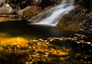 Golden pool at Thompson Falls