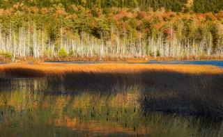 Jordan pond reed show