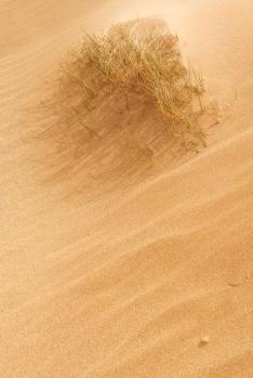 Melvich sand sculpture