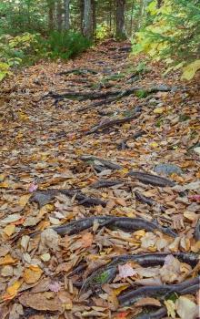 Thompsom falls woodland roots