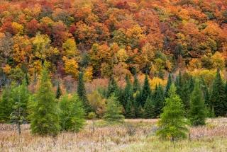 Vermont does colour