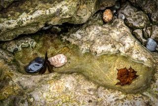 Autumn rock pool - Penmon beach