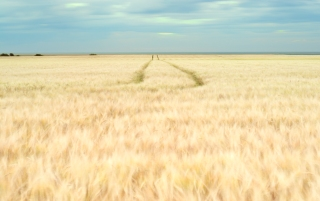 Summer fields - North Norfolk coast
