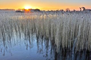 Redgrave fen winter sun