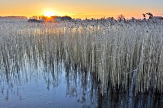 Redgrave fen winter sun