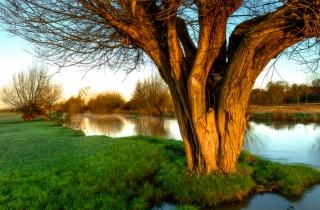 Flatford tree sunrise