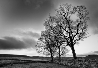 The leaning trees