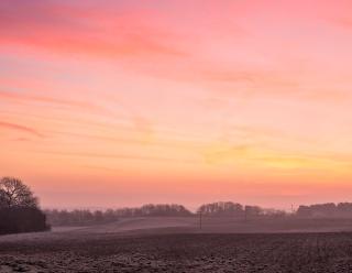 Dawn fields N Norfolk