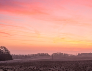Dawn fields N Norfolk