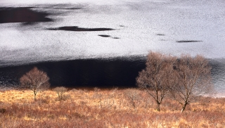 The three trees of Assynt