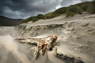 Driftwood at Seilibost