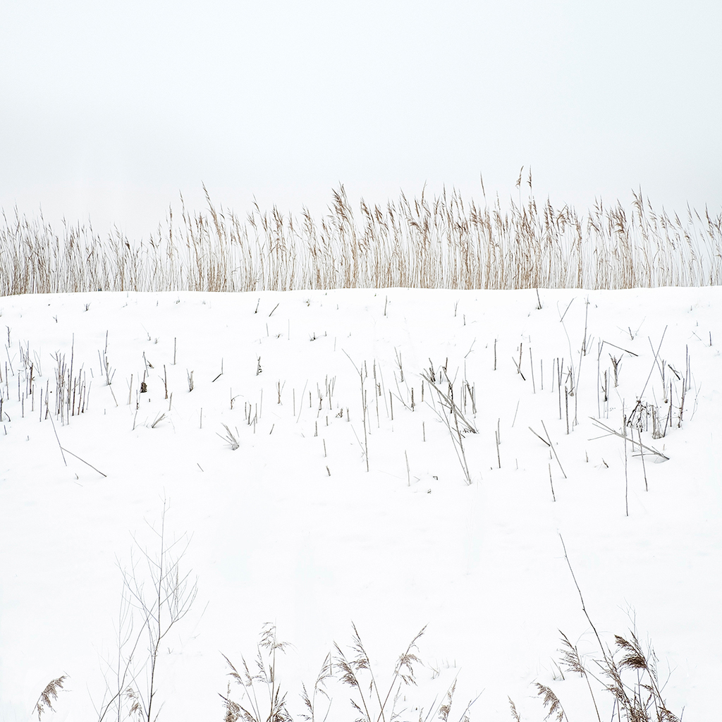 Snow and reeds - Reedham