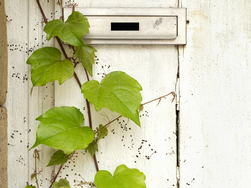 Vine and letterbox