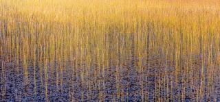Reeds upon reeds