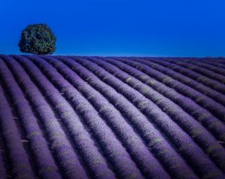 Purple scene