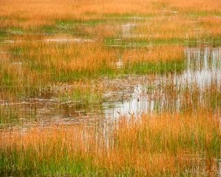 Reed pool at The Tarn