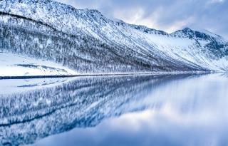 Hamn reflection