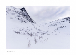 Senja Snow Forest