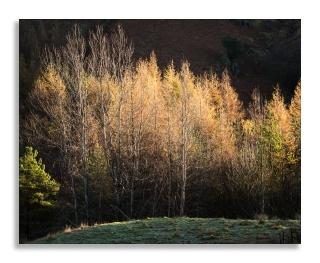 Blea tarn trees