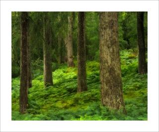 Cawdor woods
