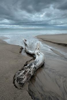 Nairn driftwood