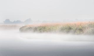 Reedham Mists