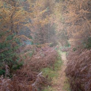 Atholl woods