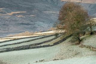 Dry stone walls and tree