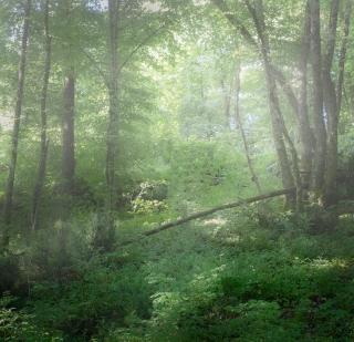 Fallen tree Bilhac