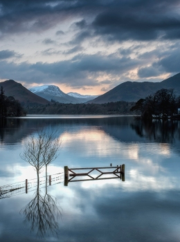 Gate and tree -Derwentwater
