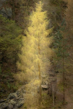 Glowing at Hodge Close