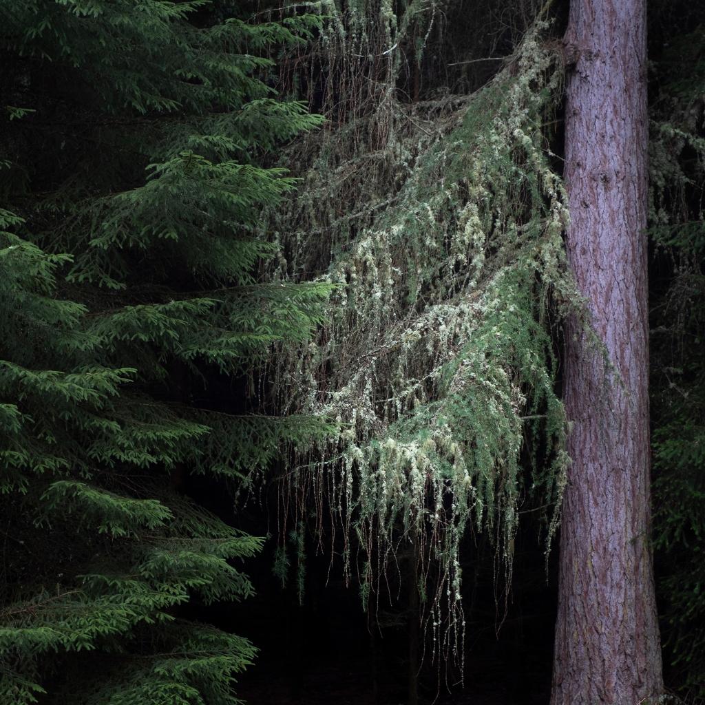 Lichen in cawdor woods 2