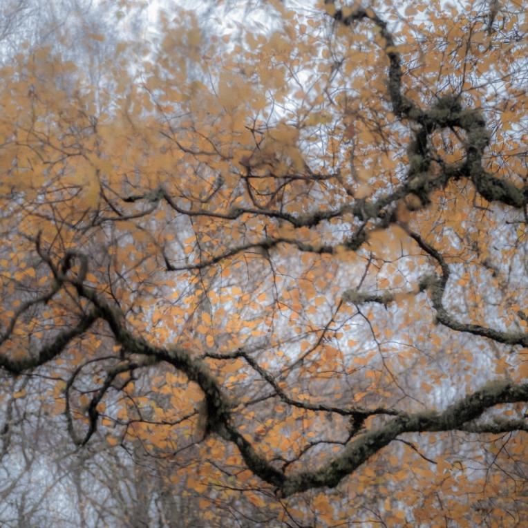 Tangled up in orange
