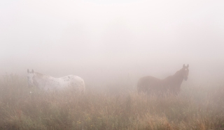 Ponies in the mist