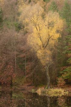 Splendid yellow