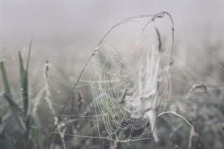 Summer cobweb