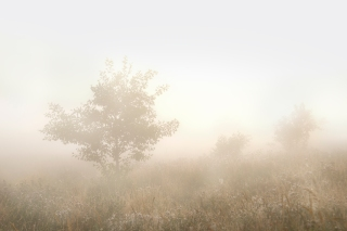 Summer fog - Loddon