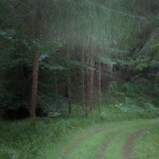 Summer in Cawdor woods