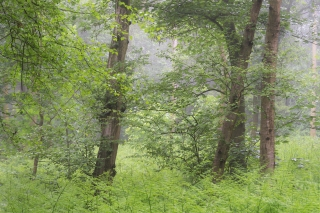 Woodland scene near Reedham