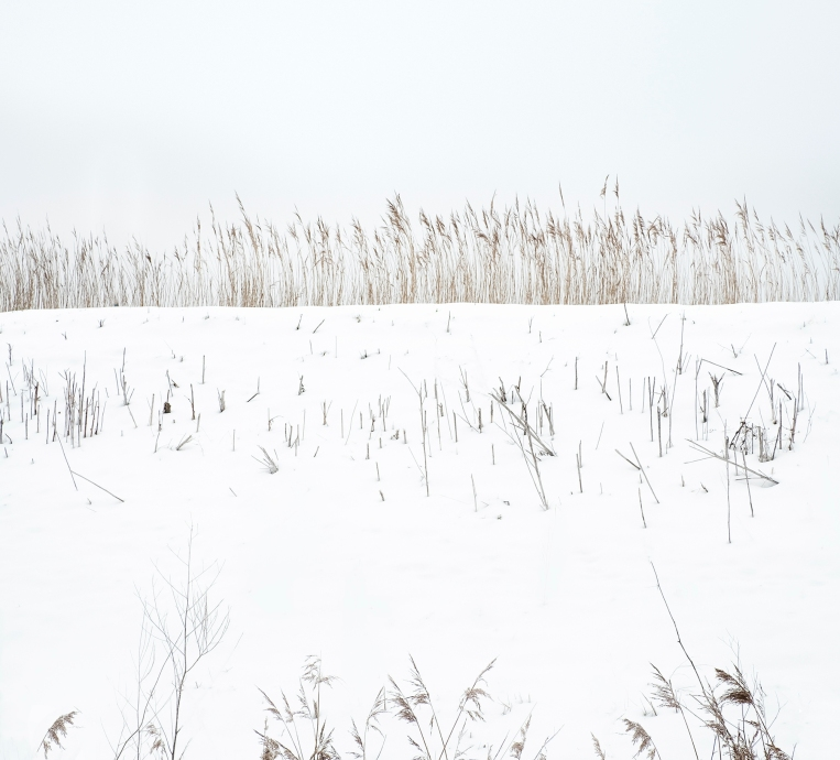 snow and reeds 8464