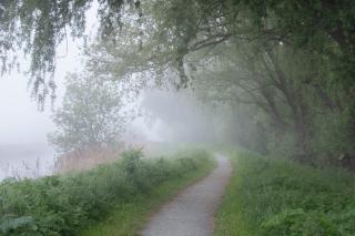 May fog on the pathway- Loddon