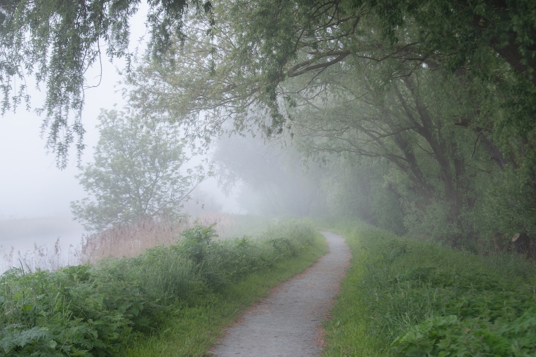May fog on the pathway- Loddon