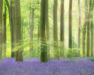 Sunlit West woods