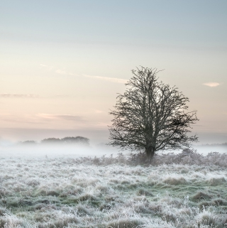 Frost and tree