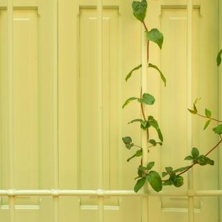 Vine and shutter