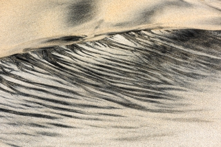 Luskentyre sand feather